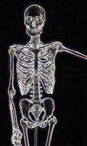 Human-Skeletona