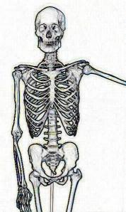 Human-Skeletonc