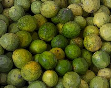 Limes-Oman