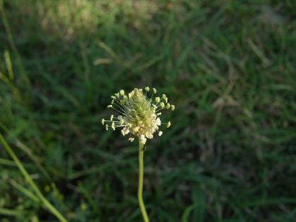 grass (1)